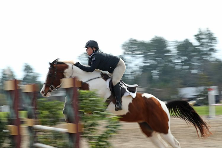 pic10_horse_jump_fast