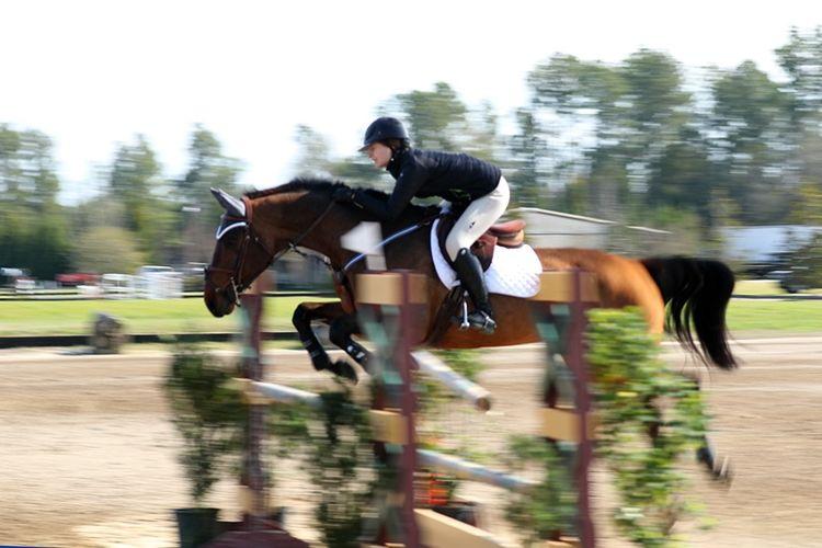 pic12_horse_jump_again
