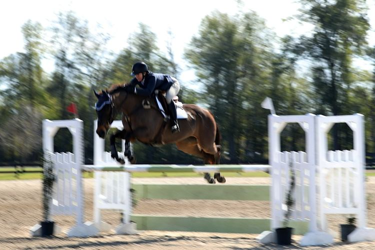 pic13_horse_jump_more