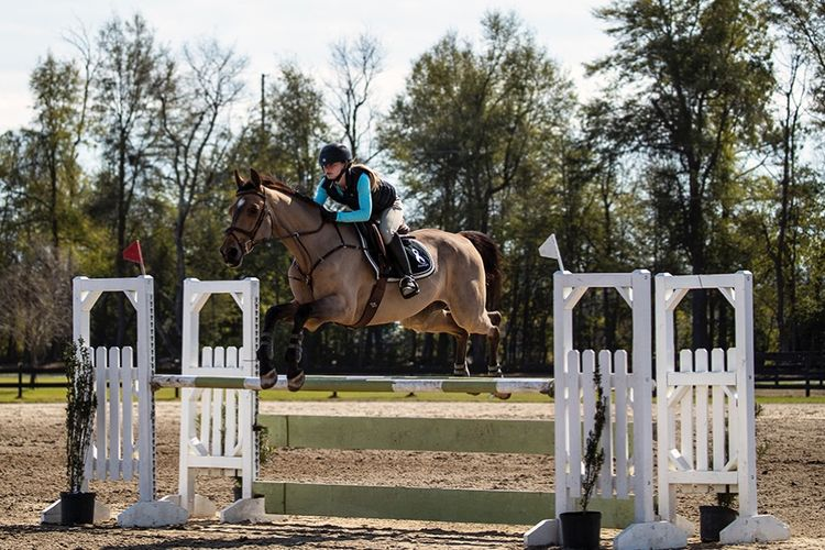 pic15_horse_jump_middle