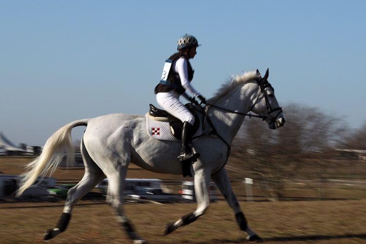 pic16_horse_running