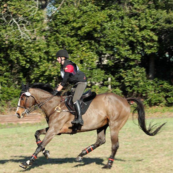 pic17_horse_running_2