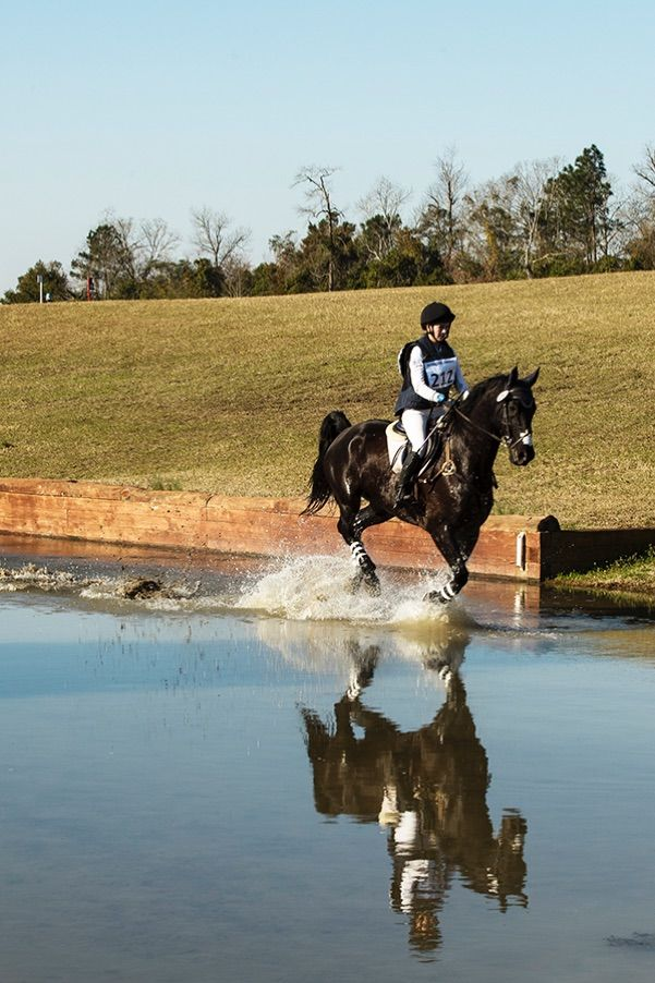 pic20_horse_in_water