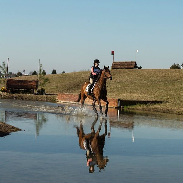 pic21_horse_in_water_2