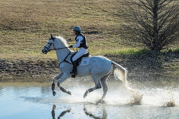 pic22_horse_running_in_water