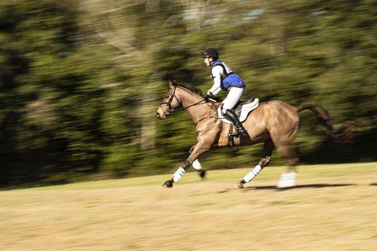 pic25_horse_run_fast
