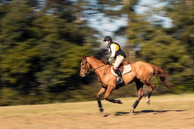 pic27_horse_toward_finish