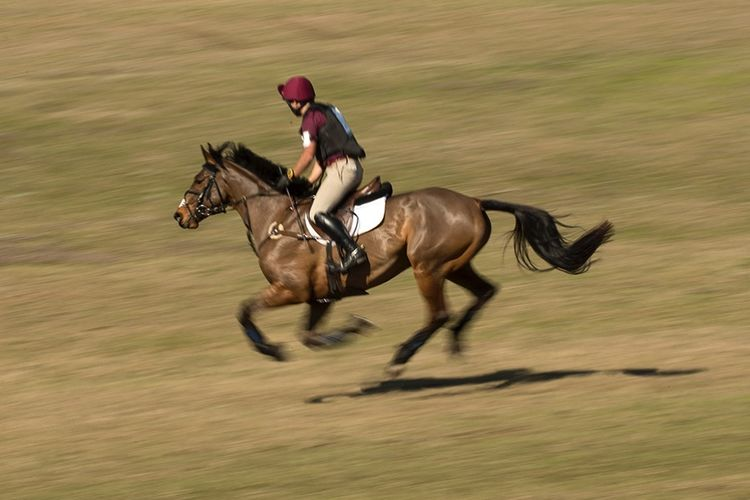 pic28_horse_runs