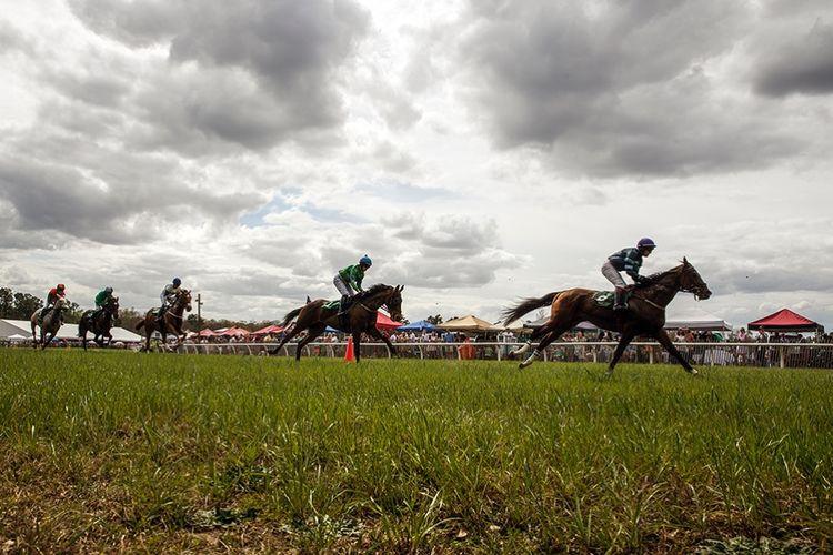 pic30_horse_races
