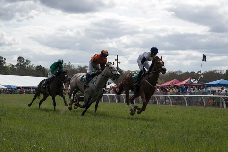 pic31_horse_races_more