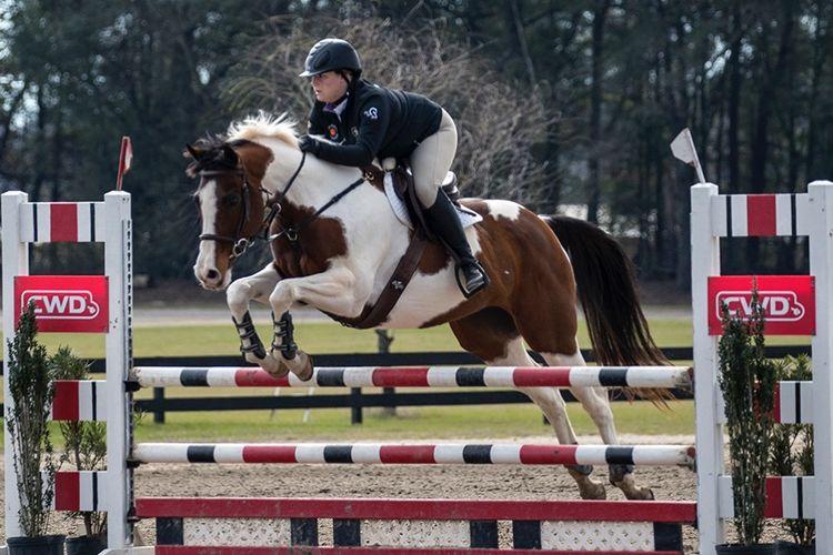 pic5_horse_jump